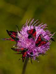 fioritura estiva, Monte Baldo