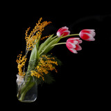 beautiful pink tulips in vase isolated on black background