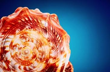 Sea shell on e blue background