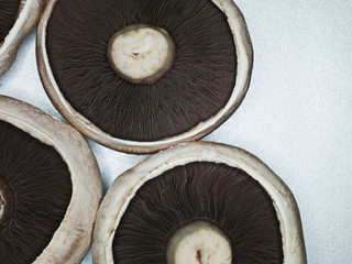 Close up of mushroom tops
