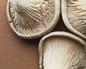 Close up of oyster mushrooms