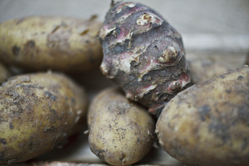 Close up of taro root