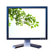 green leaf in lcd monitor isolated