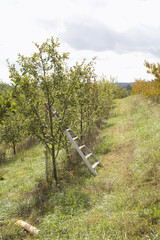 fall mountain apple orchard