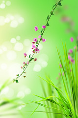 pink floral and fresh grass with light reflect in morning