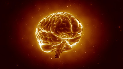 Pulsing human brain in loop