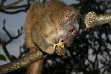 Mayotte-Iggy