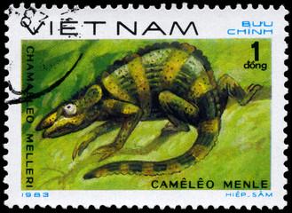 VIETNAM - CIRCA 1983 Chamaeleo