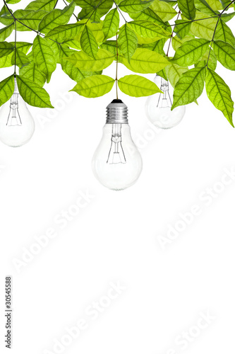 branch with green leaves and bulb on white background