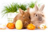 Fototapety Kaninchen mit Ostereiern