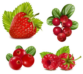 Vector illustration. Set of red berries with leaves.