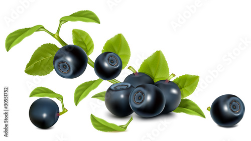 Vector. Bilberry with leaves.