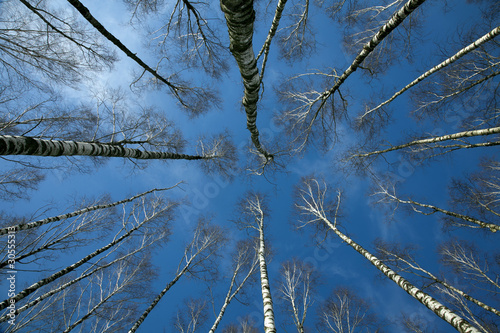 Long branches against blue sky