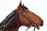 head of a horse with braided mane in profile