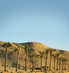 A beautiful southern desert background with palm trees
