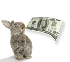 rabbit with dollar