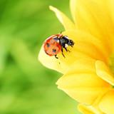 Fototapeta żółty - streszczenie - Insekt