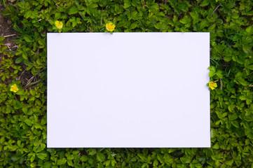 paper_plant_100