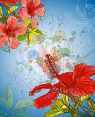 Hibiscus flower & watercolor background