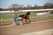 harness racing. horse