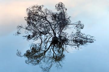 Ветви дерева торчащие из воды.