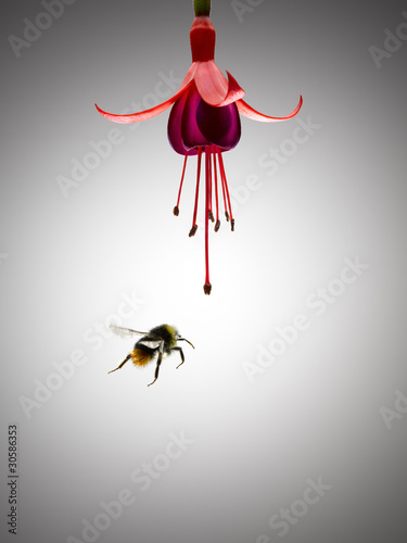 Bee flying near blooming flower