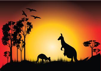 sunset with two kangaroos