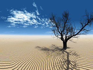 arbre mort dans le désert