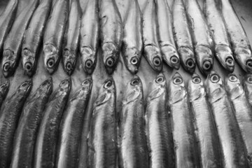 Fresh Italian anchovies