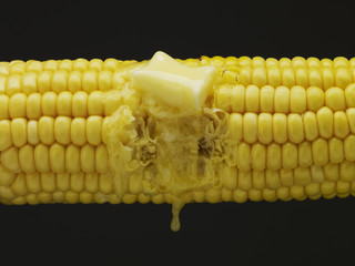 Butter melting on bite taken from corn on the cob