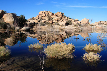 Barker Dam, Joshua Tree National Park II
