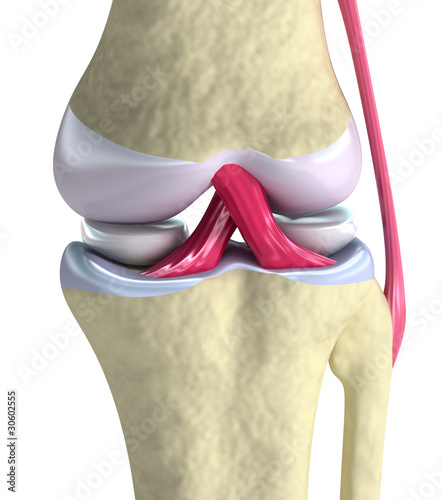 Knee joint closeup view. Isolated on white