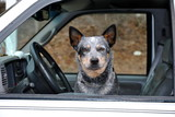 Canine Driver poster