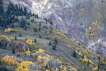 """Autumn leaves on trees on hillside, Red Mountain Pass, Colorado, United States"""
