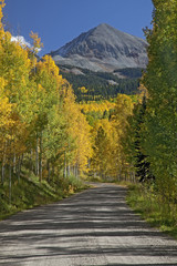 """Autumn leaves on trees along road, Sawpit, Colorado, United States"""