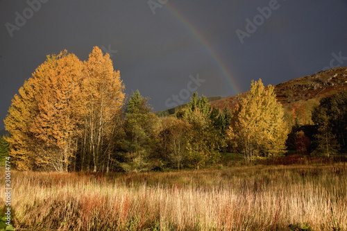 """Rainbow over autumn trees, Beaminster, Dorset, United Kingdom"""