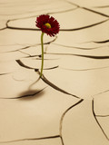 Flower blooming between cracks in mud