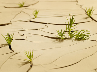 Grass sprouting through cracked mud