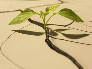 Seedling sprouting through cracked mud
