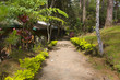Pathway in Green Forest with Red Plants