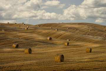 """Hay bales and rolling landscape, Tuscany, Italy"""