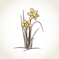 Spring daffodils. Vector background