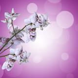 Orchidée blanche et violette