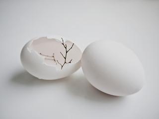 cracked tree egg