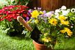 Concept jardinage