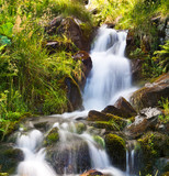 Small natural spring waterfall surrounded by moss and grass poster