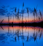colorful sunset over a wetland poster