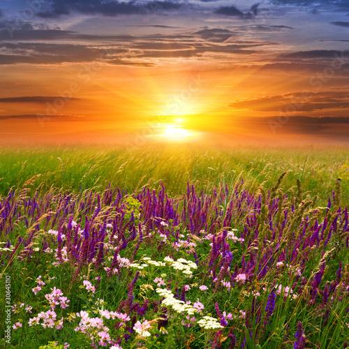 Naklejka Sunset in steppe