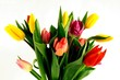 Fototapete Pflanze - Blühen - Blume