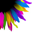 color flower abstract design